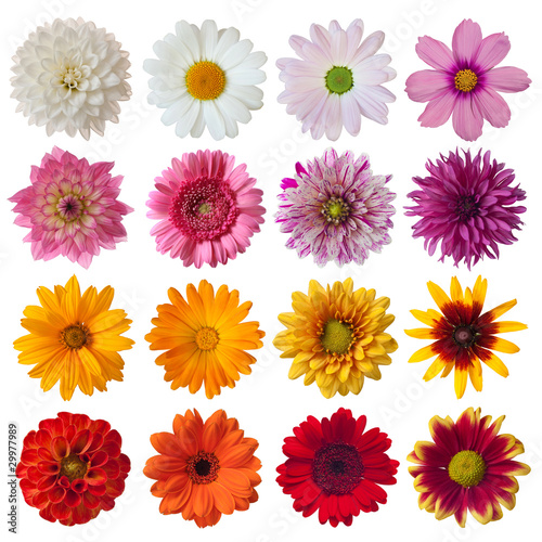 Fotobehang Gerbera Collection of daisies