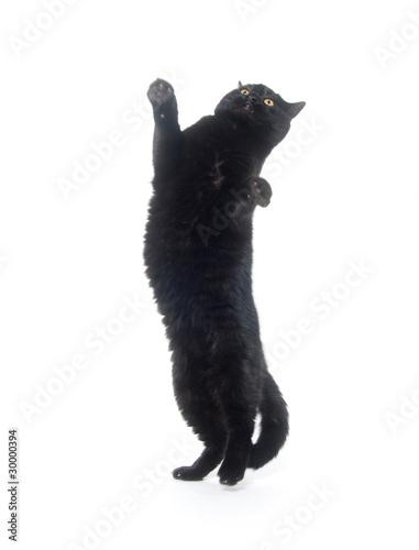 Stampa su Tela Black cat playing