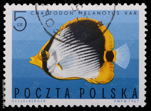 Fotografia  Poland - CIRCA 1967: A stamp - Vermiculated angel