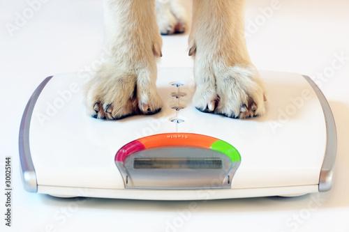 Valokuva  pesare il cane
