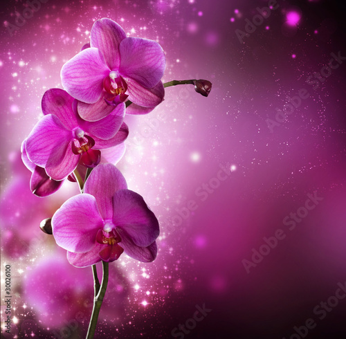 In de dag Orchidee Orchid Flower border design