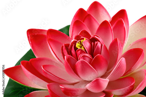 Garden Poster Lotus flower fleur rouge de lotus