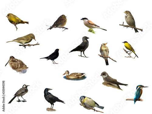Fotografia, Obraz  Birds isolated on a white background
