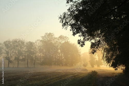Papiers peints Foret brouillard Sunrise over the meadow in a foggy autumn morning