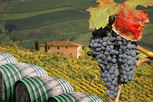 Vineyard in Chianti, Tuscany, Italy, famous landscape Canvas