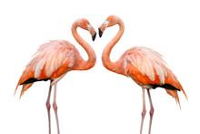 Zwei Flamingos Bilden Eine Her...
