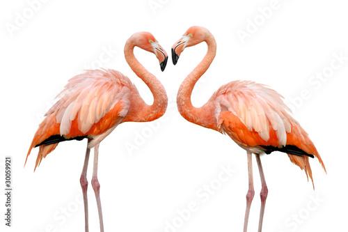 Papiers peints Flamingo Zwei Flamingos bilden eine Herzform