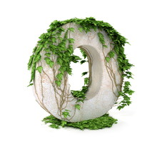 Ivy Letter O Isolated On White...