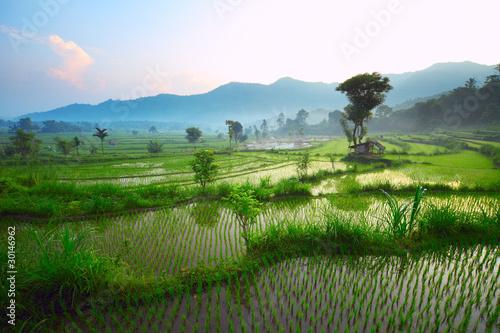Montage in der Fensternische Reisfelder Bali