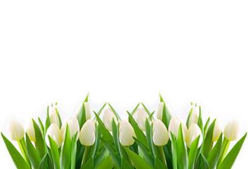 Panel Szklany Tulipany weiße tulpen