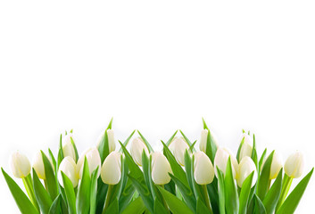 Obraz na Szkle weiße tulpen