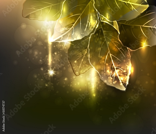 gold leaves. vector illustration
