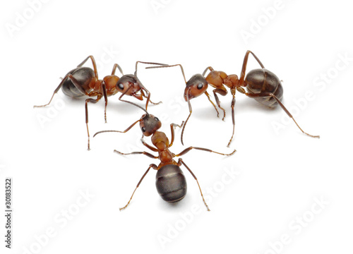 Photo ants connecting with antennas to create network for action
