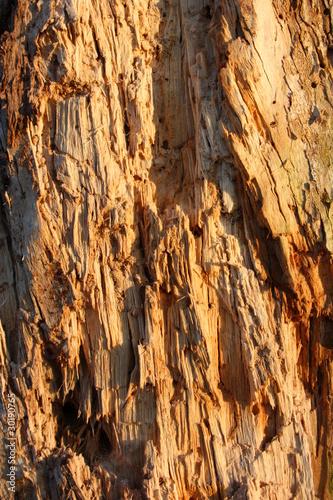 Fototapeta premium gnijąca tekstura pnia drzewa