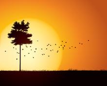 Birds Migration Through Tranqu...