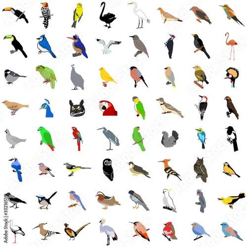 Valokuvatapetti Big collection of birds. Vector