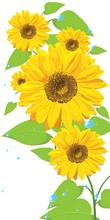 Sunflowers (postcard)