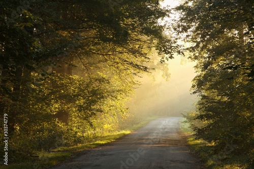 Papiers peints Foret brouillard Country road in the autumn forest on a foggy morning