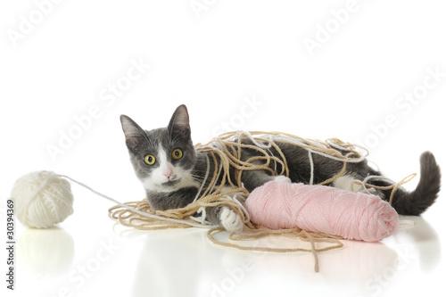 Fotografie, Obraz  Yarn-Tangled Kitty
