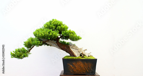 Stickers pour porte Bonsai Bonsai