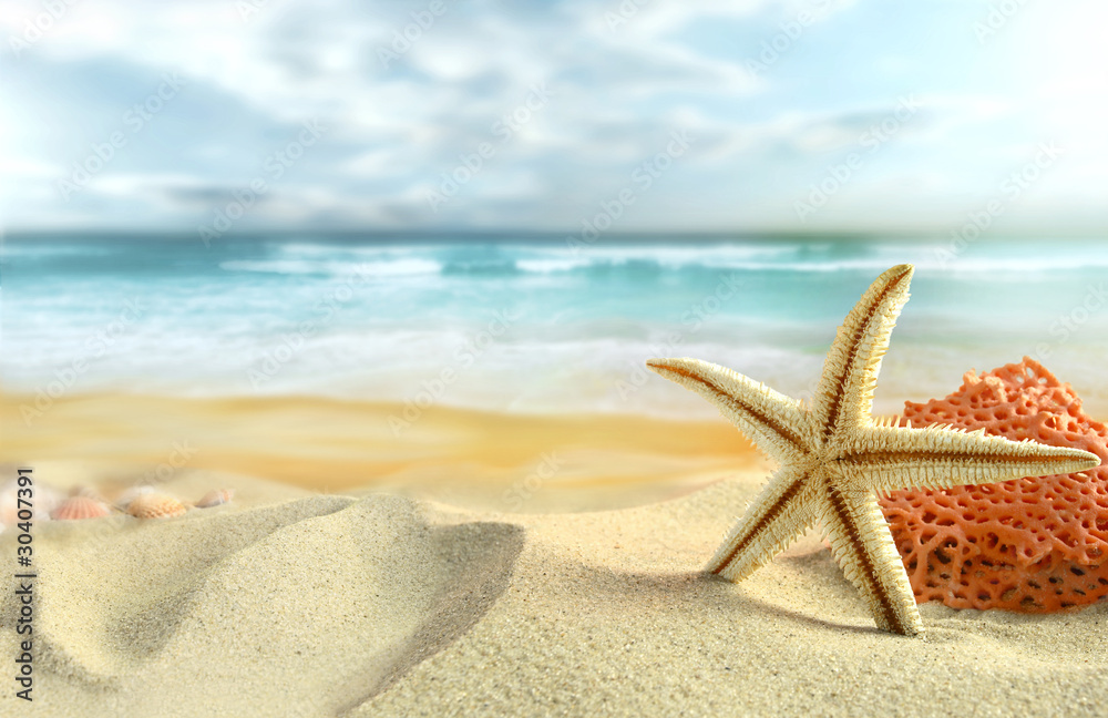 Foto Rollo Basic - Starfish on the Beach