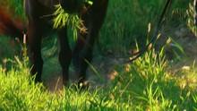 Cavallo Che Mangia - Slow-motion