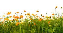 Forest Of Orange Flowers
