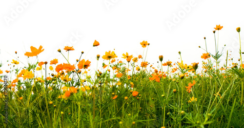 Deurstickers Weide, Moeras Forest of orange flowers