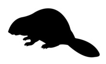 Silhouette Beaver On White Background