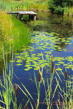 Scenery With Pond And Water Plants
