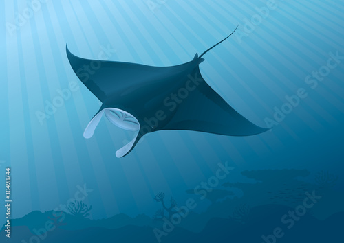 Obraz na plátně Manta Ray flying above the seabed. Full compatible gradients