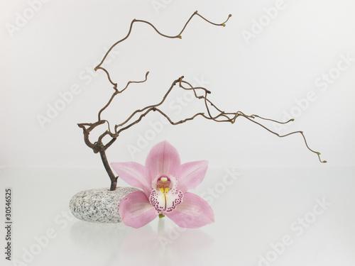 Aluminium Prints Orchid Zweig mit Orchidee