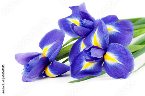 Deurstickers Iris iris bouquet