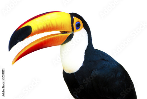 Ingelijste posters Toekan Beautiful Toucan