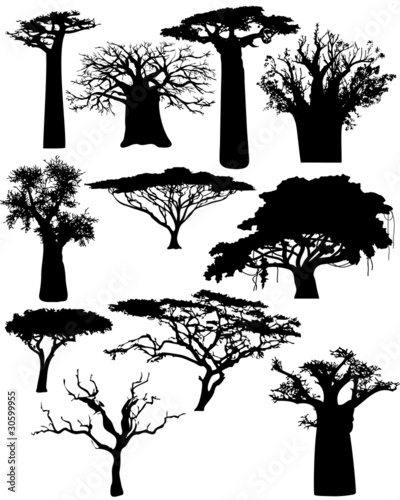 Valokuvatapetti various African trees and bushes - vector