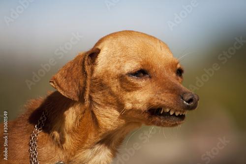 Fotografia dog with weird smile
