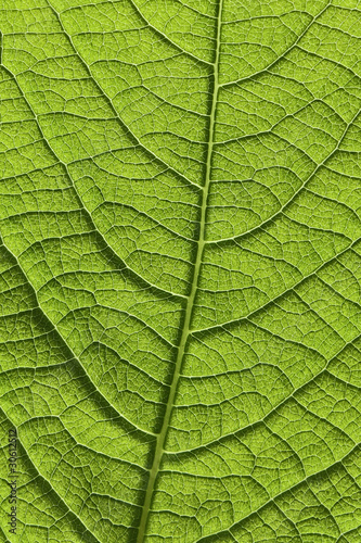 Garden Poster Decorative skeleton leaves Blatt Makro