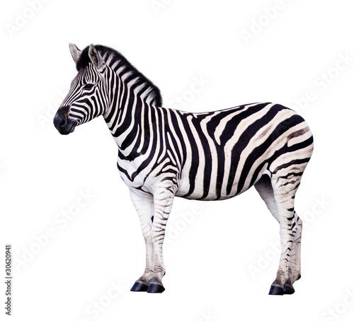 Tuinposter Zebra Zebra