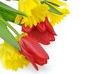 Fototapeta Kwiaty - wiosenne kwiaty na białym tle