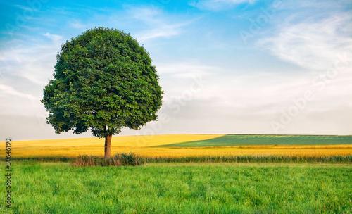 Obraz Landschaftspanorama - fototapety do salonu