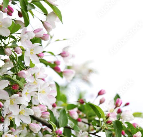 Fototapeta wiosna wiosenne-kwiaty-jabloni