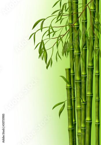Doppelrollo mit Motiv - Бамбуковая роща, фон из стеблей бамбука