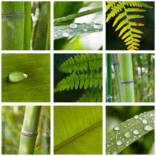 Fototapeta bambus   zielony-kolaz-bambusow