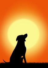 Dog On The Sunset Background ,vector Image