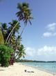 Martinique - Sainte-Anne : plage des Salines