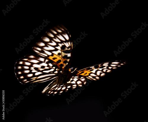 Fotografie, Obraz  Butterfly Neurosigma Siva Nonius isolated on black