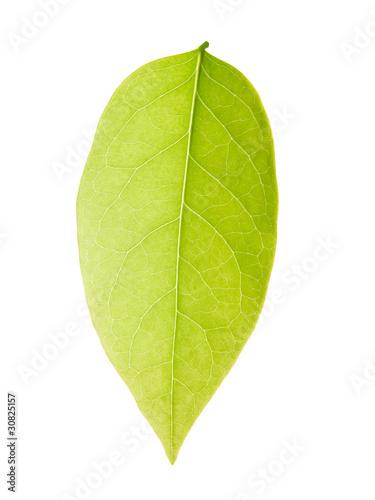 Tuinposter Decoratief nervenblad Star gooseberry leaf