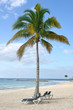 Beach Chairs under Palm Tree on Tropical Beach
