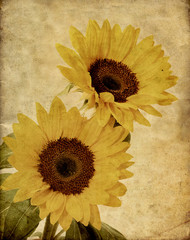 FototapetaSunflowers textured