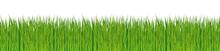Fresh Green Grass Strip